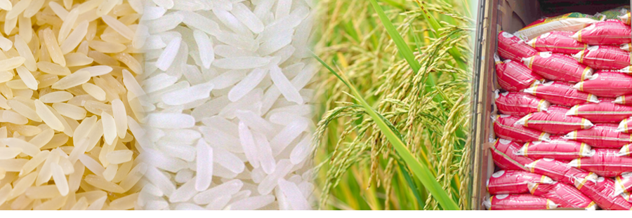 Indian Rice Exporter, Indian Parboiled Rice, Raw Rice Gujarat